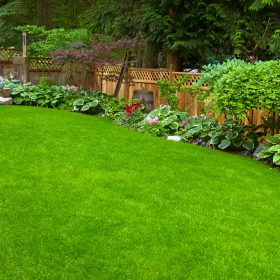 5 Things To Consider Before Buying New Plantings